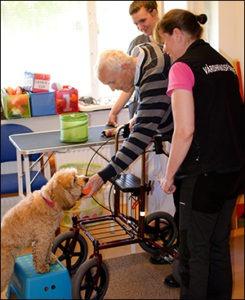 Hund i rehabarbete