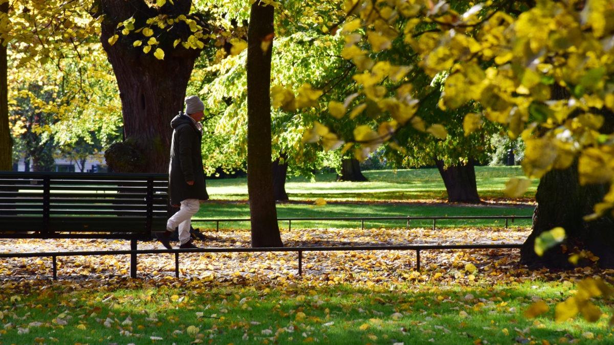 Parkmiljö i höstskrud, träd med löv i förgrunden, gående man i bakgrund, verktyget Stress och balans