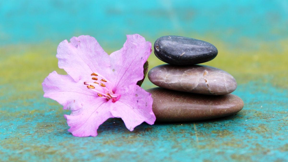 en rosa blomma bredvid en liten hög med tre stenar. Blått ljus i bilden.